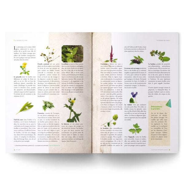 Les herbes en cuisine (fanes, mauvaises herbes, herbes des champs)